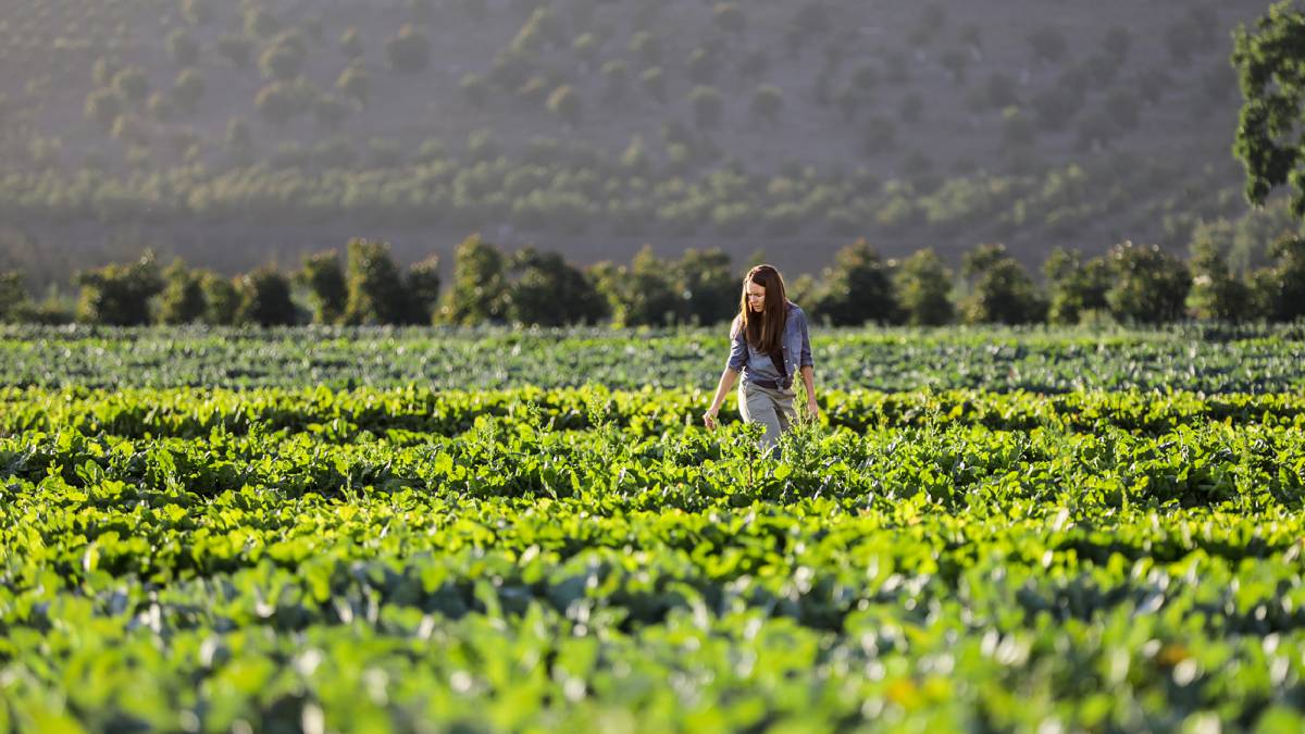 Resultado de imagen para buenas practicas agricolas
