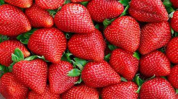 Estrés post-trasplante en el cultivo de la fresa