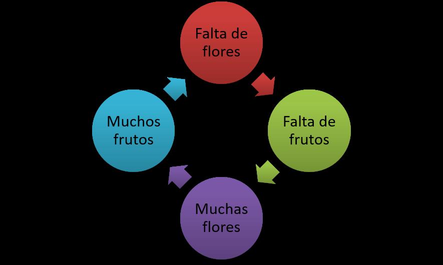 Figura 3. Esquema de la alternancia de cosechas en cítricos.