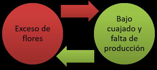 Figura 4. Esquema de la falta de producción continua originada por el exceso de flores en los cítricos.