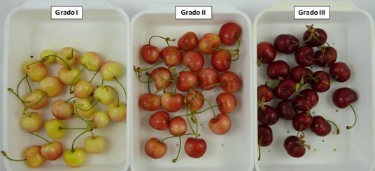 Figura 1. Aspecto visual de los distintos grados de madurez analizados.