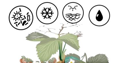 El sistema defensivo vegetal: cómo funciona y cómo mejorarlo