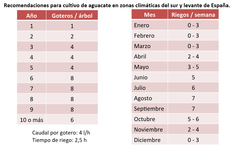 Recomendaciones para cultivo de aguacate en zonas climáticas del sur y levante de España.