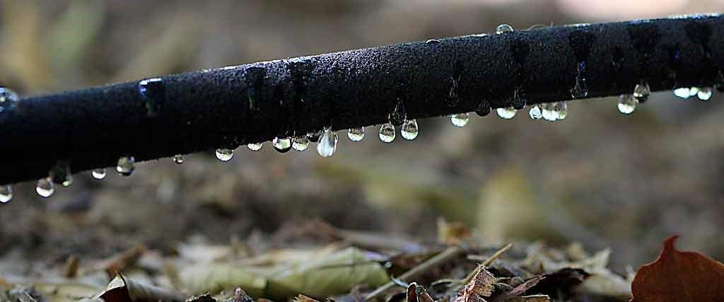 Necesidades hídricas del cultivo de aguacate
