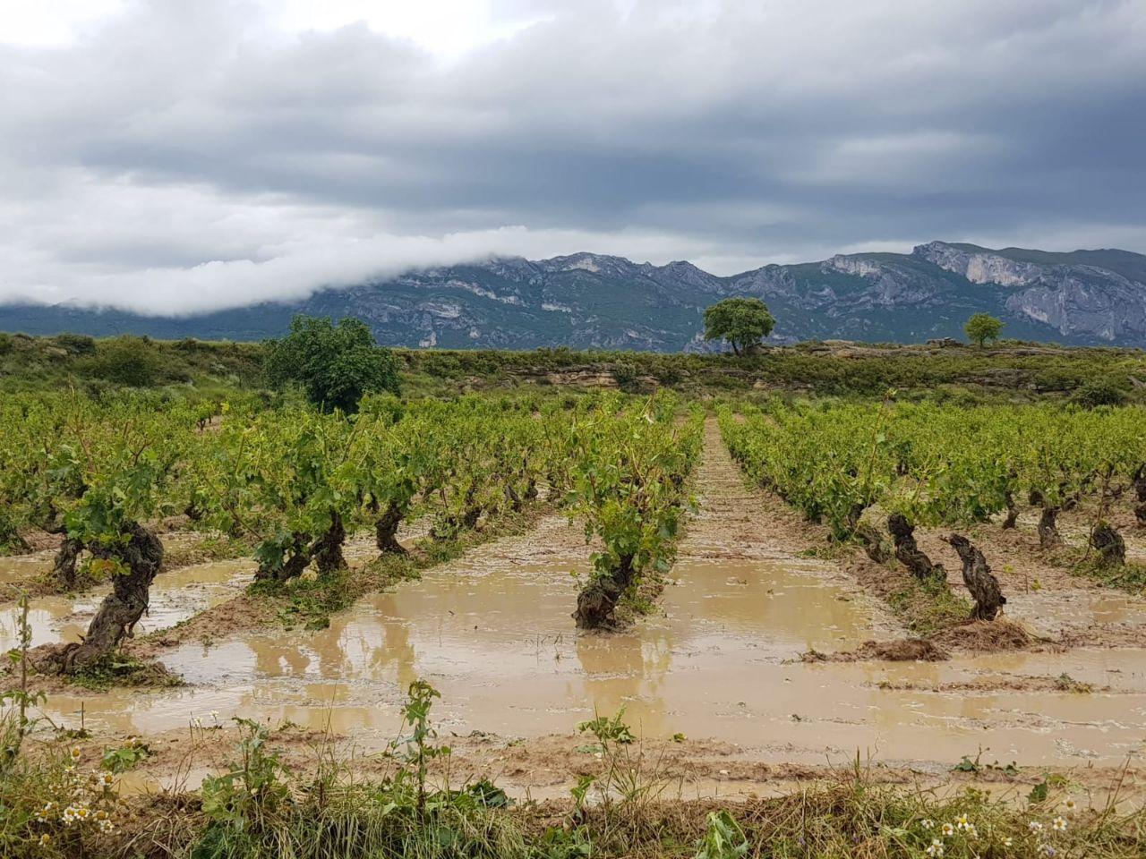Rioja Alta - pedrisco agricultura