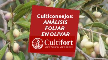Realización análisis foliar en olivar