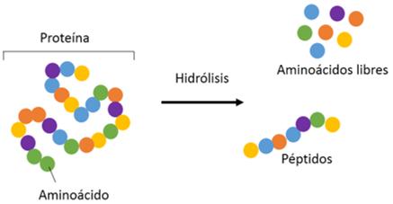 Hidrólisis aminoácidos