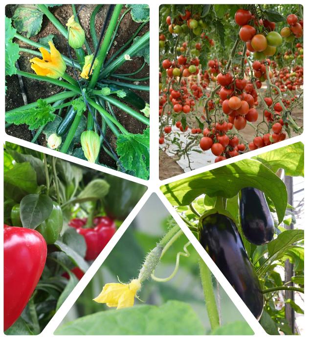 campaña agricola
